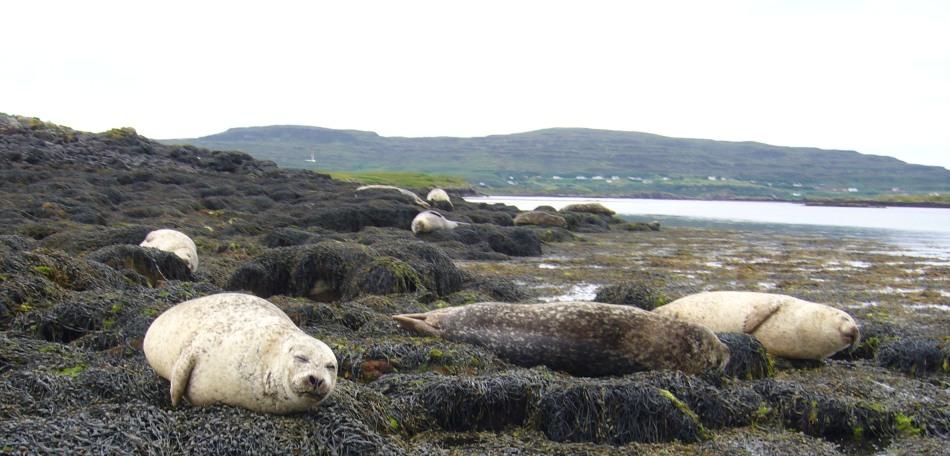 Zeehonden bij Dunvegan Castle